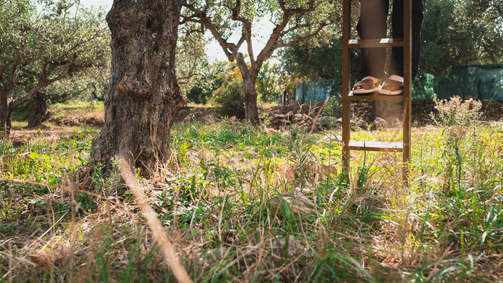 Olive Tree Farmer