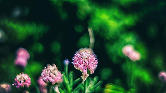 Flowers - Bokeh