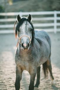 horse_photography.jpg
