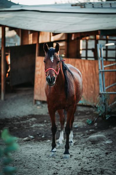 horses_photography.jpg