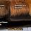 Thumbnail: Chocolate Deluxe Fox