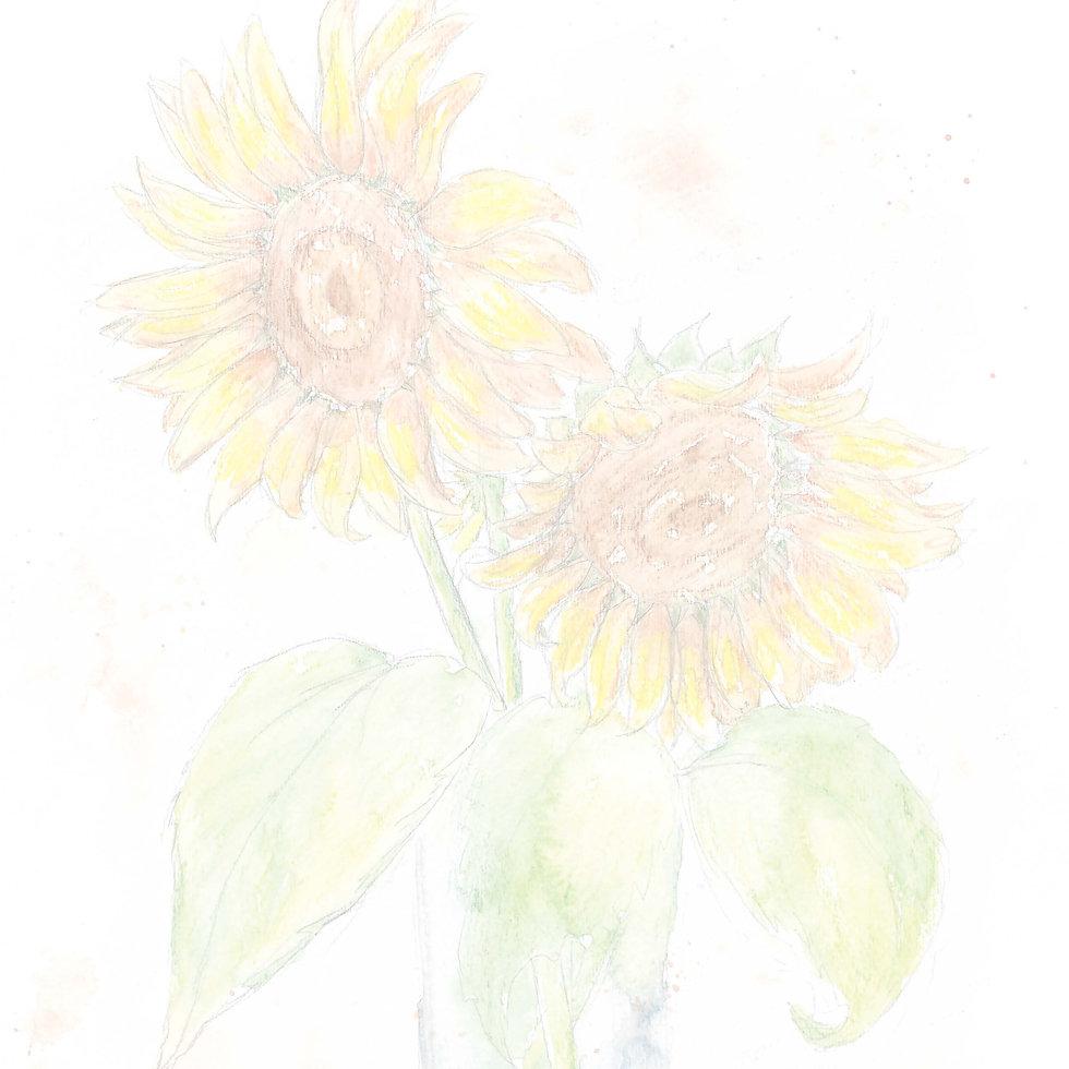 faded sunflower.jpg