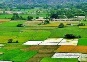 How much land people own in Telangana State? Check official revenue records here