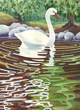 swan water.jpg