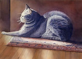 Cat-on-rug.jpg