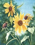 Sunflower-smaller.jpg