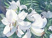 Lilies-smaller-file.jpg
