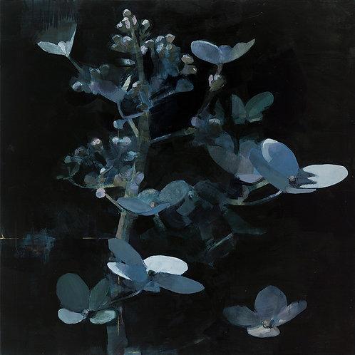 Paniculata Bleu Celeste