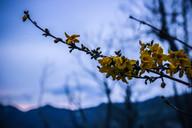 sound_of_spring.jpg