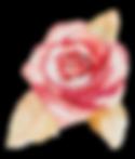 Rose%2525202_edited_edited_edited.png