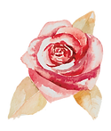 Rose%2525202_edited_edited_edited.png