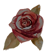 Rose%25202_edited_edited.png