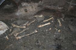 עצמות עז בשולי המחילה