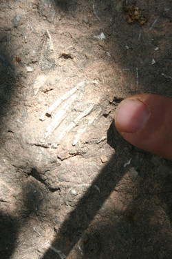 שברי עצמות בברקציה שבחזית המערה