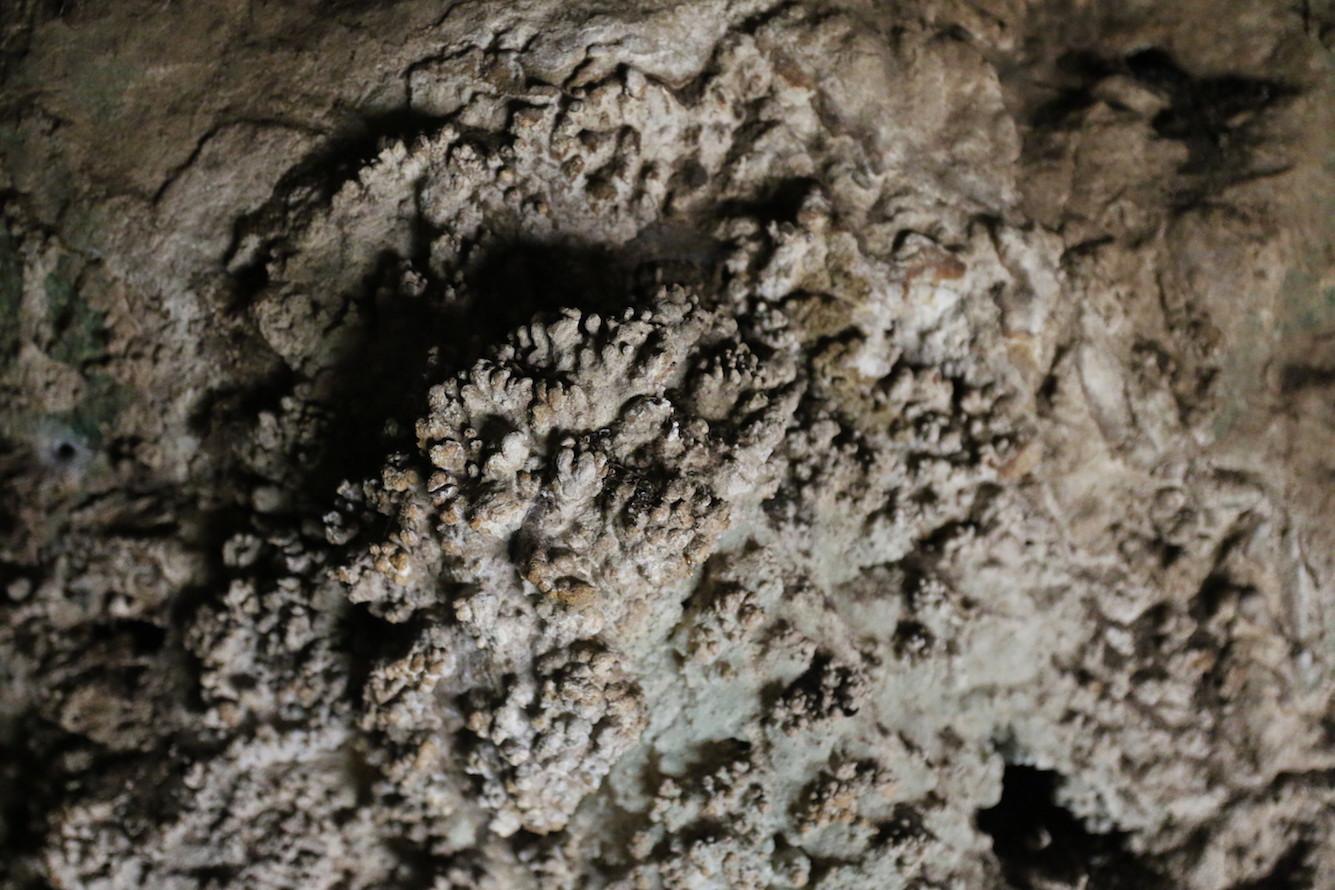 אלמוגי מערות באזור הפתח