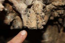 משקעי מערות צנועים בחלקה הפנימי של המערה