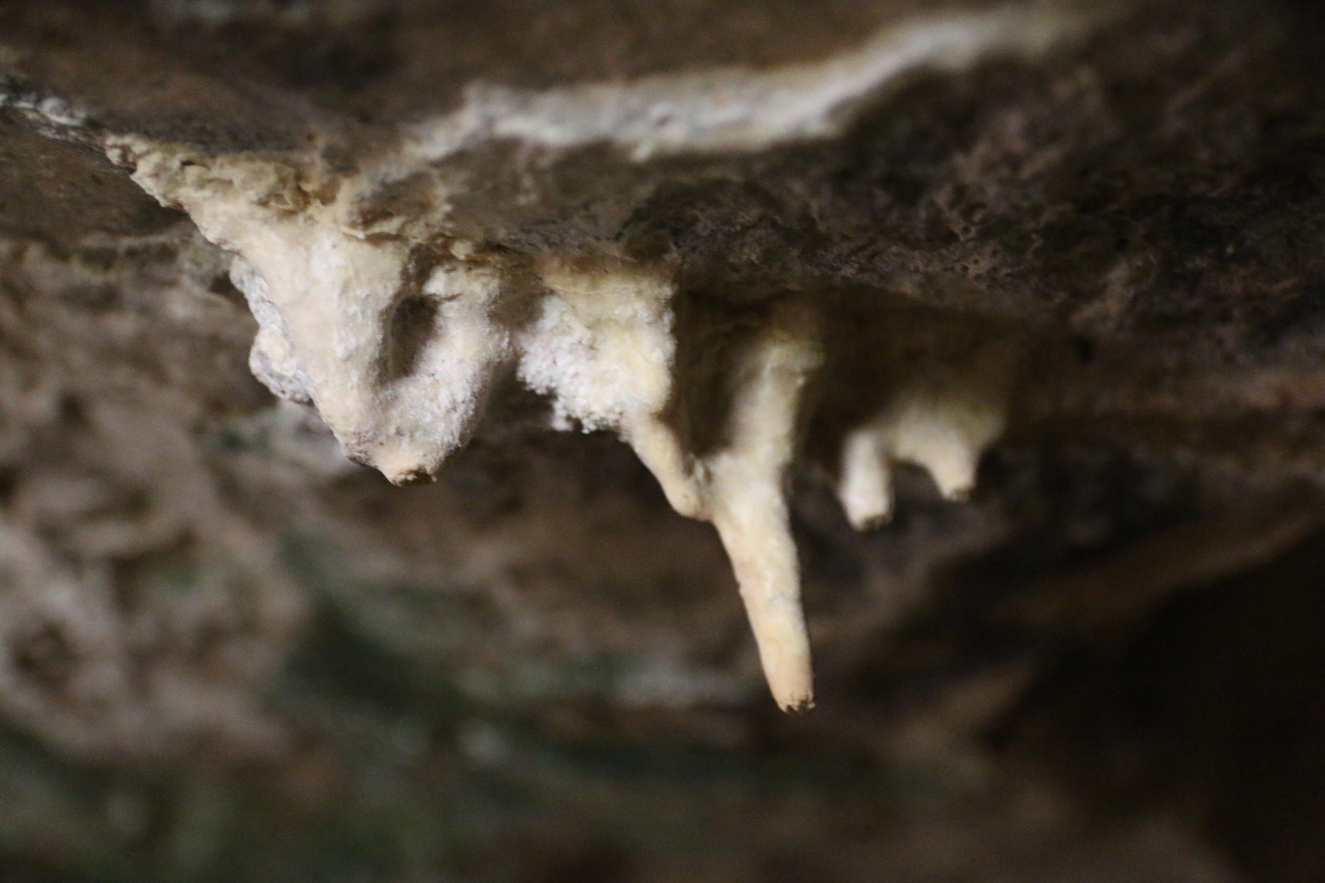 נטיפים בחלקה הפנימיש ל המערה
