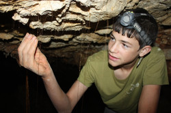 שורשי צמחים משתלשלים מתחת המערה