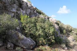 פתח המערה מוסתר מאחרוי הצמחיה