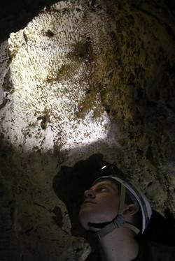 משקעים בתקרת המערה