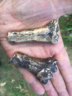 bronze cast bones.jpg