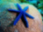bluestarfishnov52018.jpeg