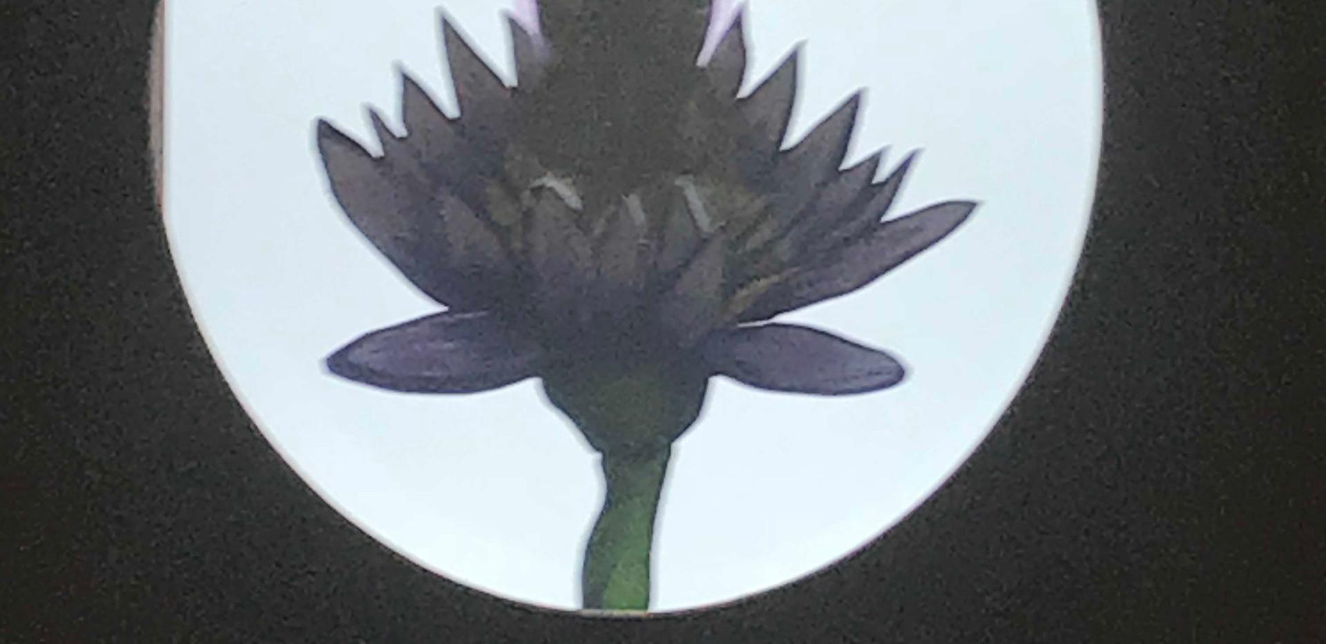 Transforming Into Light (detail)