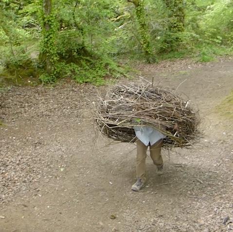 Birds Nest Project