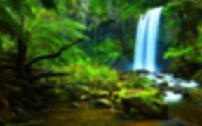 AmazonRainforest2.jpeg