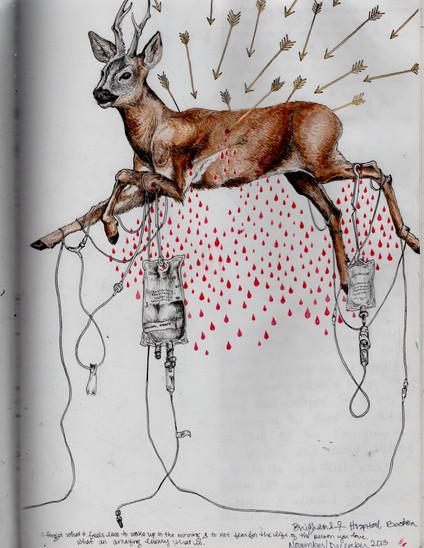 sketch book: hunted deer. Boston, MA. December 2013
