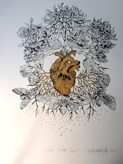 Cicada Growth Cycle