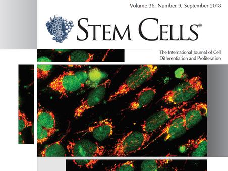 New publication on Stem Cells regarding EPCs