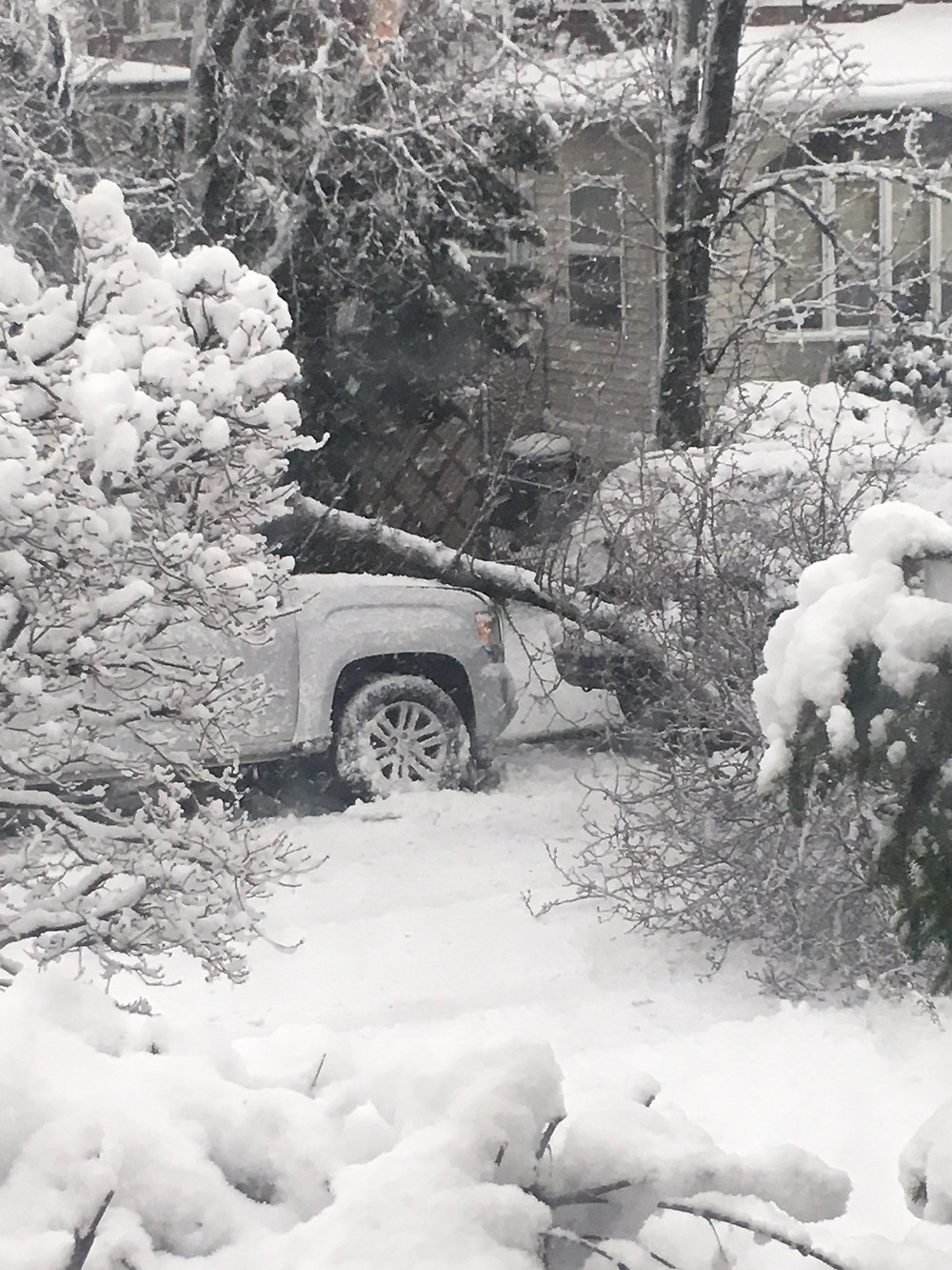Tree fell on car