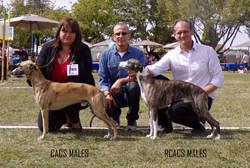 CACS MAles