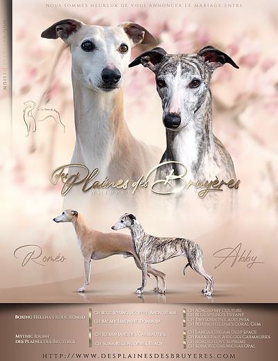Romeo x Abby mating and pedigree 2.png