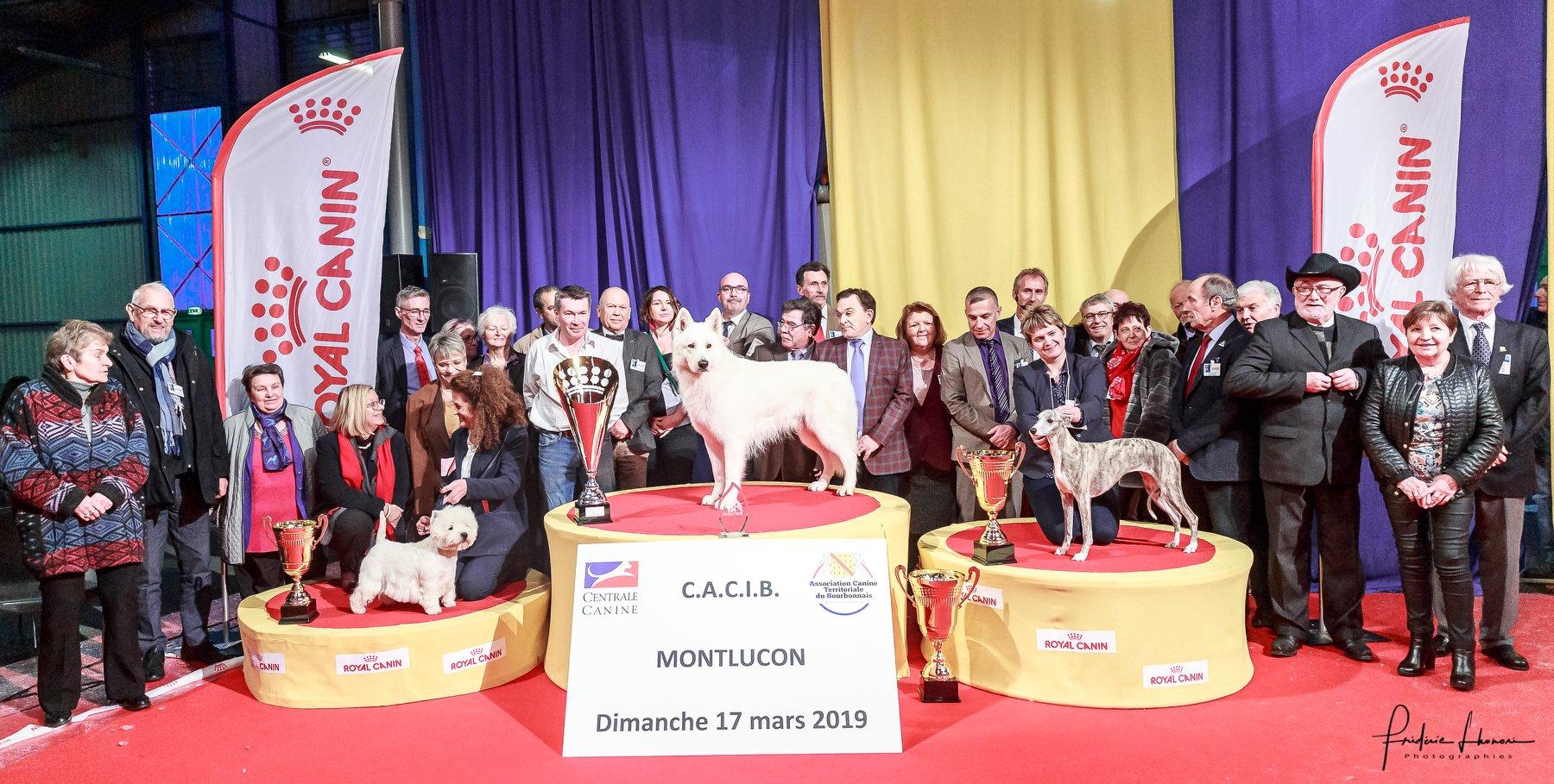 Reserve Best in Show Montlucon 2019