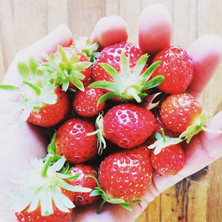 #october #gardening 🍓Yes, they're still