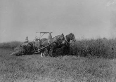 Horse-Pulled Binder