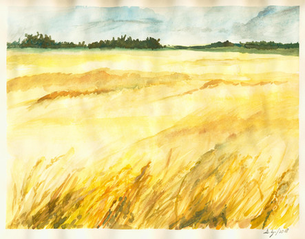 Wheat Field 50