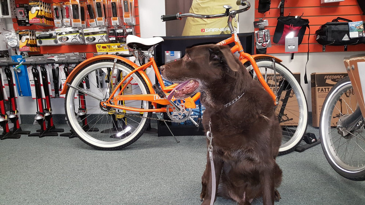 Charlie enjoying a shop visit