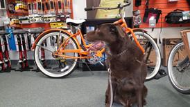Charlie enjoying a shop visit