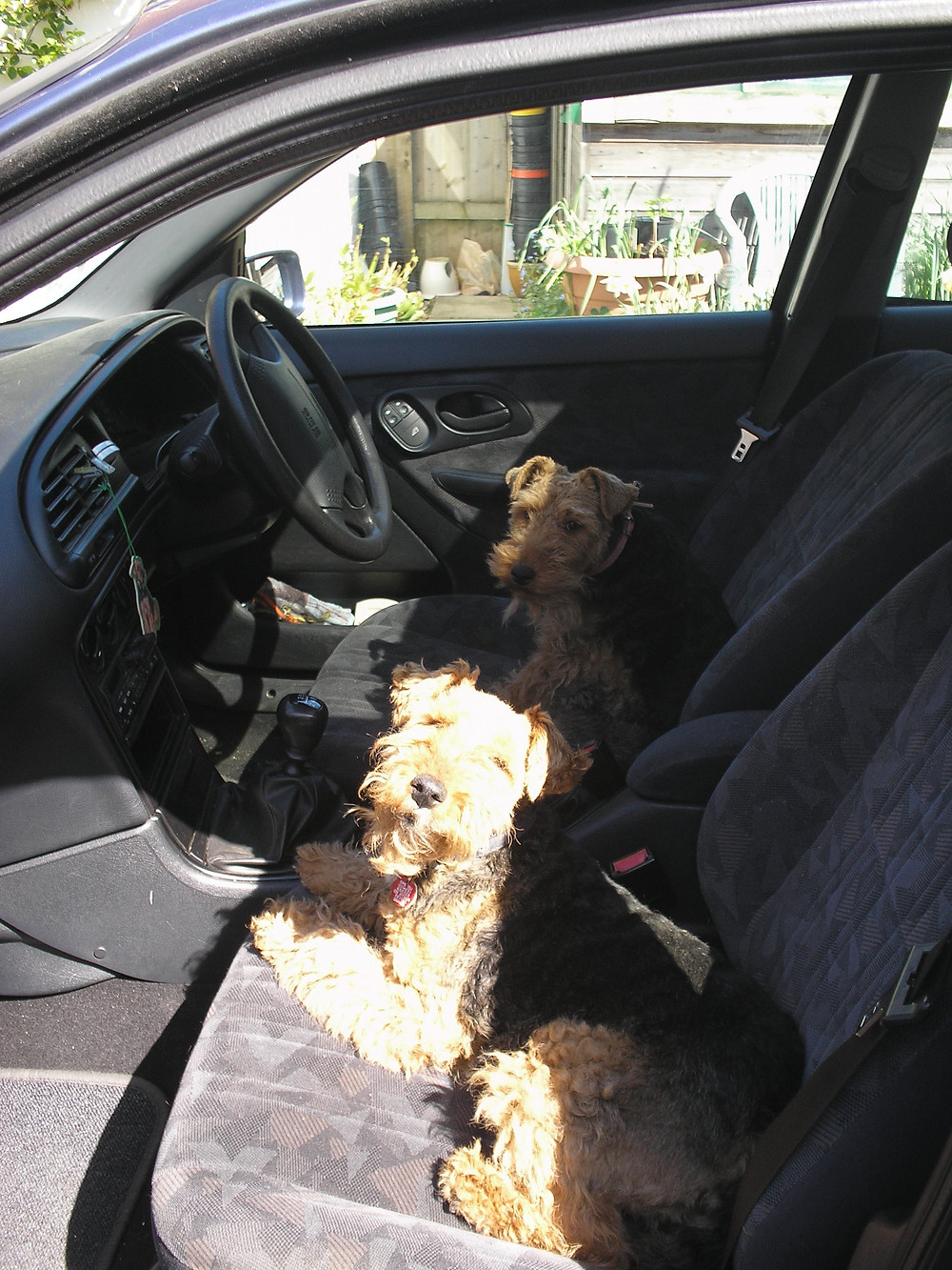 Dogs in car 001.JPG