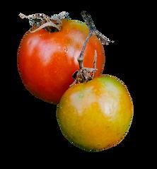tomatos3.png