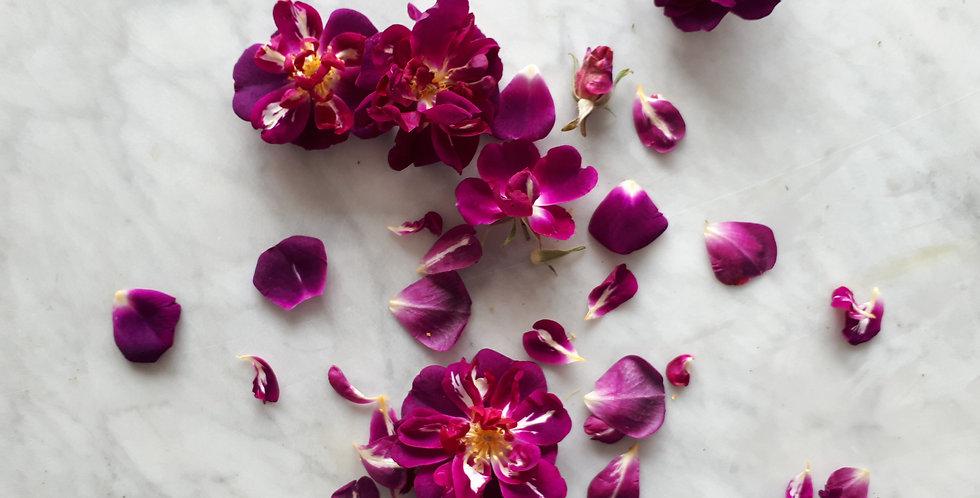 Rosa gallica, Roos