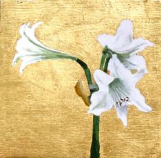 Gilded White Amaryllis