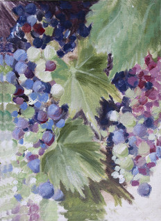 Italy: Summer Grapes, Greve