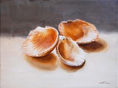 SOLD   Scallop Shells