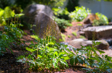 Planting and boulder arrangment (design by Sallie Hill Design)