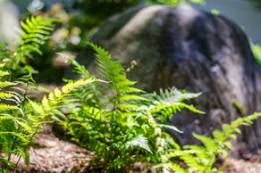 Boulders and ferns
