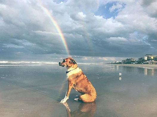 All rainbows lead to dogs on a beach.jpg